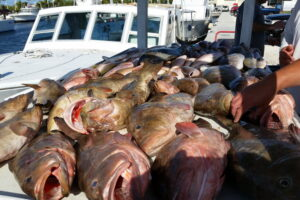 grouper season is open_resize